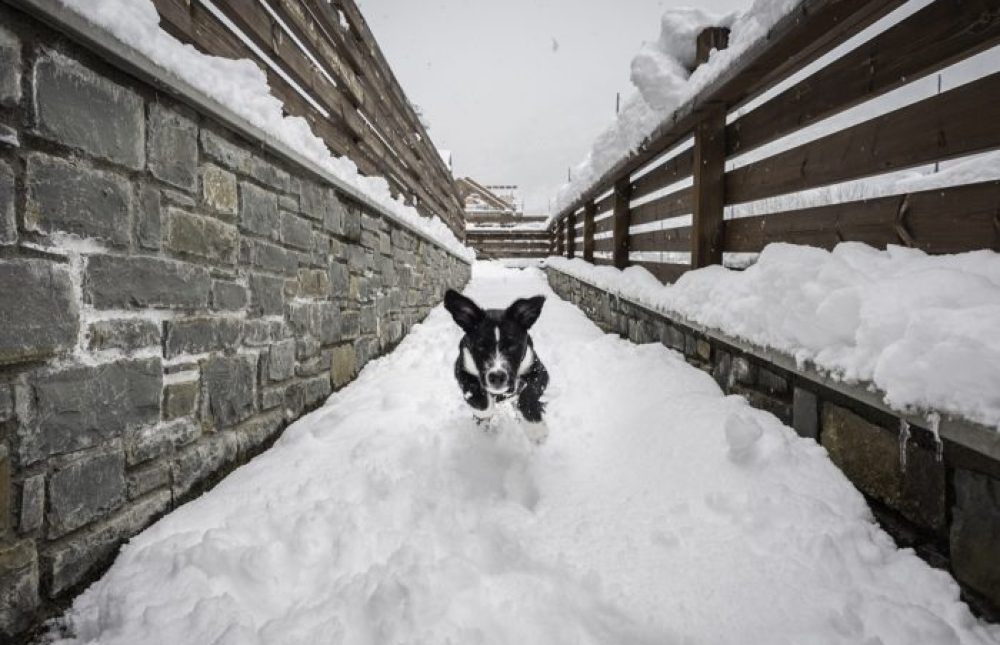 Nuestro perro montañero Moskis saltando en la nieve